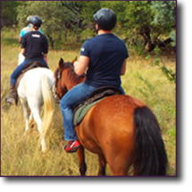 Build Confidence in Horses