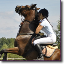 Strategies for Problem Horses